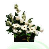 Bunga Meja EHRI-004