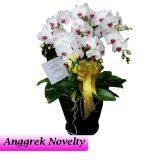 Bunga Anggrek Bulan Novelty AGR-010
