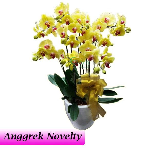 Bunga Anggrek Bulan Novelty AGR-011