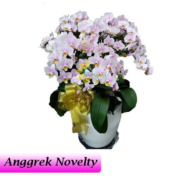 Bunga Anggrek Bulan Novelty AGR-012
