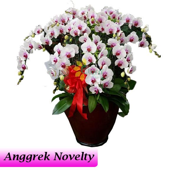 Bunga Anggrek Bulan Novelty AGR-014