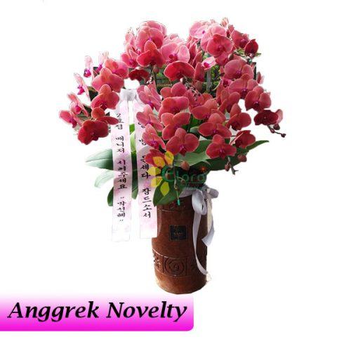 bunga anggrek novelty